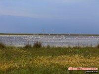 Красоты озера Сиваш на Арабатской стрелке (фото, видео)