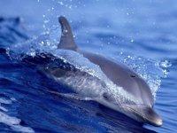 Дельфинарий откроют 21 июня 2014!!!