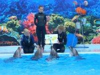 Шоу-программа в дельфинарии на Арабатской стрелке(видео)