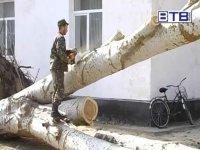 В с. Стрелковом военные помогли убрать дерево со школьного двора!(видео)
