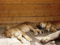 САФАРИ ПАРК или Контактный Зоопарк на Арабатской стрелке!!!(фото)