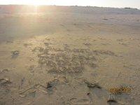 Шум Азовского моря на Арабатской стрелке в октябре!!!(Фото и видео)