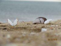 Азовское море на Арабатской стрелке, последние дни уходящего года(фото и видео)