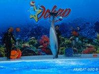 Дельфинарий на Арабатской стрелке откроется 10 июня.